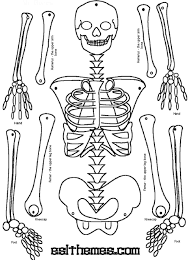 Halloween Skeleton Cut Out by Halloween Skeleton Bones Printable Anatomy Chart Body