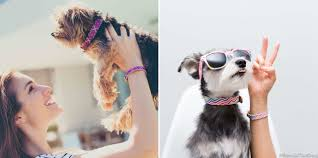 friendshipcollar matching dog collars and bracelets dog milk