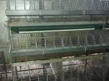gabbie per conigli nani usate gabbia conigli accessori vari per animali a roma kijiji