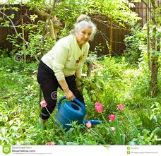 Flowers In Garden Old Lady Watering Flowers In Garden Stock Photography Image