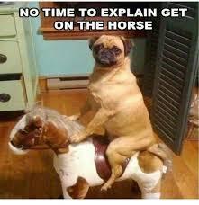 Dog In Bed Meme - fresh 14 best funniest dog memes images on pinterest wallpaper
