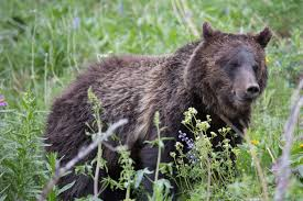 Wyoming wild animals images 12 photos of wildlife in wyoming that will make your jaw drop jpg