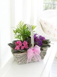 mothers day plants s day mothersdayflowers ie