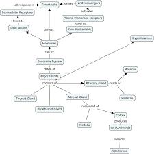 endocrine system concept map ch 16 endocrine system 1