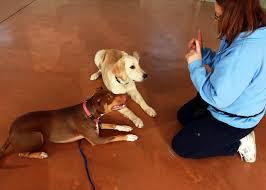 boarding grooming training gold star pet resort inc
