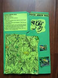 south american rain forest unit study and the poison arrow frog