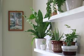 best house plants best indoor plants to improve your home s air quality grass