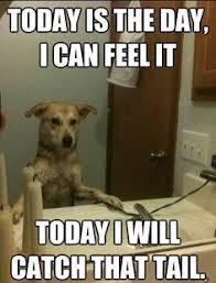 Stoned Dog Meme - stoner dogs meme 10 dog meme funny dog memes dog memes follow