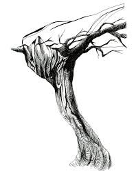 tree sketch timothy tsun