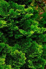 berri native plants 36 best poisonous toxic plants images on pinterest plant