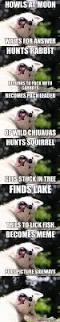 best 25 moon moon memes ideas on pinterest dogs funny husky