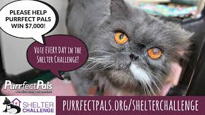 Purrrfect Meme - hamlet asked us to remind you to please purrfect pals cat