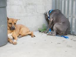 How To Comfort A Friend This Shelter Dog Teaches Us How To Comfort A Friend During Sad Times