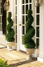 best 25 topiary trees ideas on topiaries bay trees
