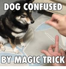 Magic Trick Meme - dog sed by magic trick meme on me me