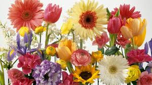 spring flowers backgrounds wallpapersafari