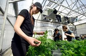 lafayette florist cultivas bio hemp nursery in lafayette