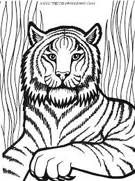 male lion coloring page printable pages click the to head pictures