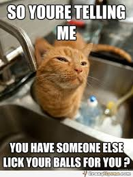 Meme Jokes Humor - sceptical cat adult humor so you are telling me you have someone