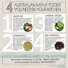 australian native plants brisbane why haven u0027t we embraced indigenous foods 1 million women