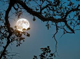 of moonlight at sky near sea poetic nature images