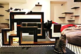 all new cat cafe directory u2013 u s and canada u2013 cat wisdom 101