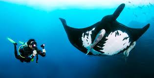 sea dragon 2500 photo video dive light sealife s sea dragon lights and strobe add color underwater scuba