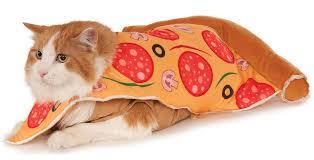 Kitten Halloween Costumes Pet 9 Cool Pet Costumes Put Human U0027s Halloween Costumes Shame