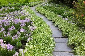 Plant Combination Ideas For Container Gardens - download plant garden ideas solidaria garden