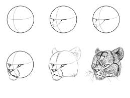 big cat face tutorial by napawlion on deviantart