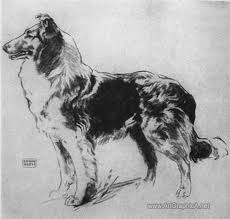 Dog Anatomy Book How To Draw A Dogs