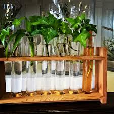 growing plants in test tubes little plants