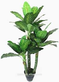 diffenbachia plant x 14 lvs home decorative green leaves outdoor