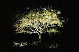 amazing led landscape tree lights shedding light on moonlight