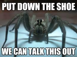 Funny Spider Meme - spider meme google search funny memes such pinterest