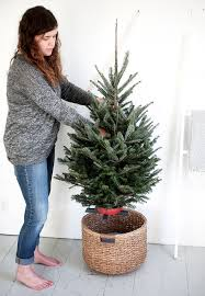 creative ideas small real trees get the scent and feel