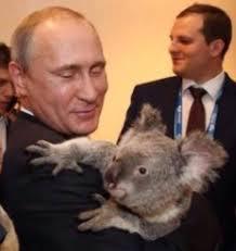 the tail of putin and the koala album on imgur