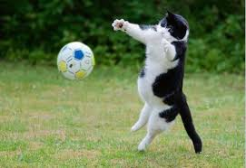 my cat is perfect goalkeeper aww