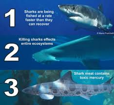why protect sharks
