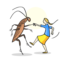 cuddling cockroaches u2014 tcm picture book