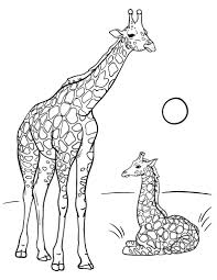 Giraffe Coloring Pages Free Giraffe Coloring Page by Giraffe Coloring Pages