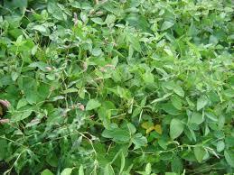 chambre d agriculture de l yonne du soja à 36 q ha dans l oise