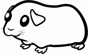 draw draw guinea pig kids hellokids