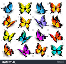 big collection colorful butterflies vector stock vector 414837082