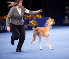 the 2012 national show presented by purina airs on thanksgiving