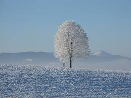 lonely snowy tree domain free photos for 4000x3000