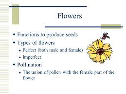 Part Of Flowers - agriscience applications ppt video online download