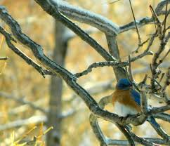 pam u0027s english cottage garden eleven winter birds of pennsylvania