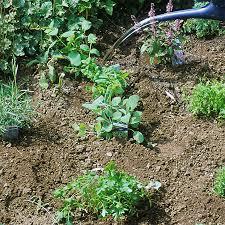 krã uter balkon arctar küche kräuter pflanzen