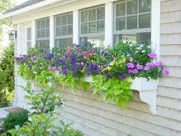 What To Plant In Window Flower Boxes - flower box houzz